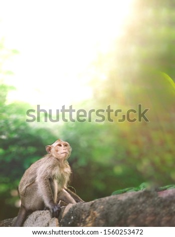 monkey stock photos best monkey wildlife nature photography