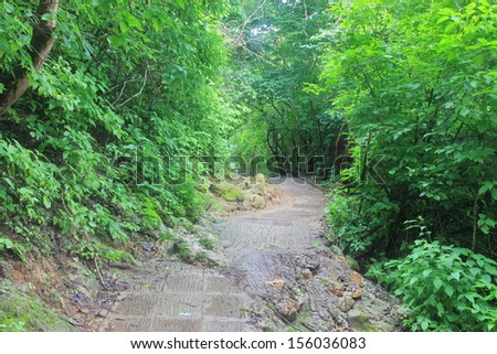 Forest trail road #156036083