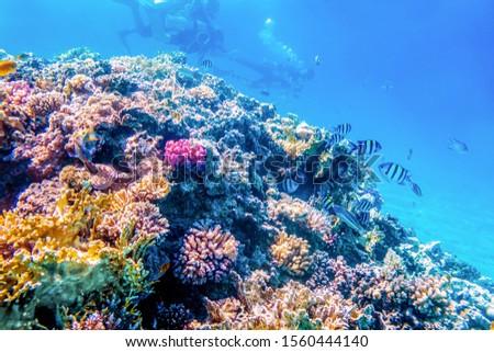 Coral reefs, wonderful underwater world #1560444140