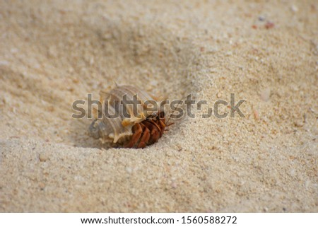 Small crustacean on Bamboo Island in Thailand #1560588272