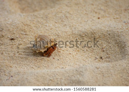 Small crustacean on Bamboo Island in Thailand #1560588281