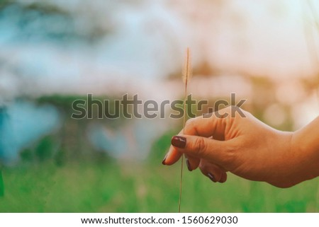 Close up woman hand holding grass flower, hello summer season, nature wallpaper background, relaxation and lifestyle concept #1560629030