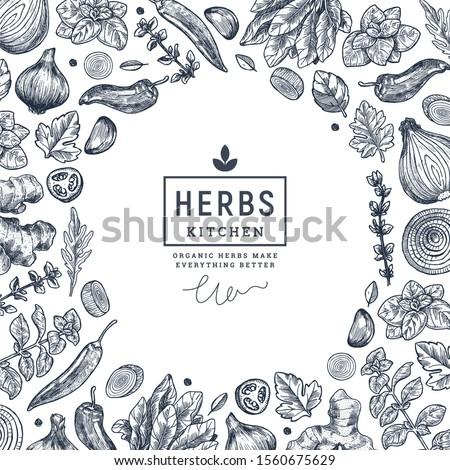 Herbs and spices frame design. Ginger, spinach, onion, pepper, garlic, fennel, basil, oregano engraved vintage illustration. Vector illustration #1560675629