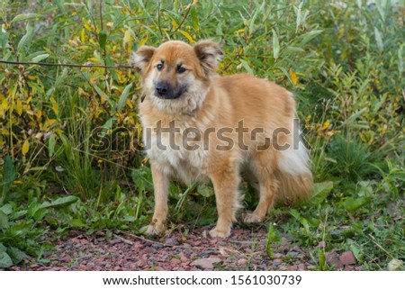 Ginger dog from animal shelter on an autumn background #1561030739