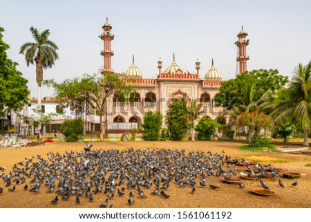 Karachi Masjid Aram Bagh Mosque Picturesque View from the Park with Flock of Pigeons Eating Food on a Cloudy Day #1561061192