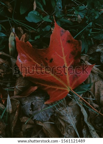 Fall leaf on the ground #1561121489