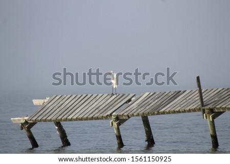 bodies of water bays beaches birds #1561150925