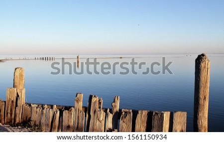 bodies of water bays beaches birds #1561150934