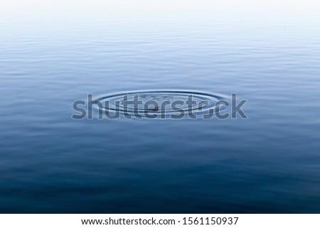 bodies of water bays beaches birds #1561150937