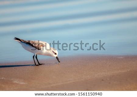 bodies of water bays beaches birds #1561150940