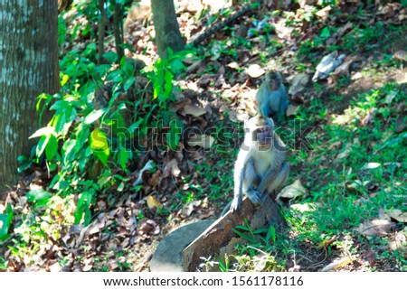 wild monkeys, monkeys out of the forest, monkeys looking for food #1561178116