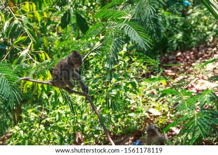 wild monkeys, monkeys out of the forest, monkeys looking for food #1561178119