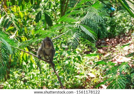 wild monkeys, monkeys out of the forest, monkeys looking for food #1561178122