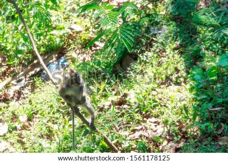 wild monkeys, monkeys out of the forest, monkeys looking for food #1561178125