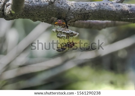 insects, animals, nest of insects, some insects in the nest of another insect, insect nature, insect life, close up photos of the nature insects #1561290238