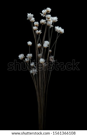 Bouquet of dried flowers dried flowers on a gray background. Beautiful bouquet of dried flowers #1561366108