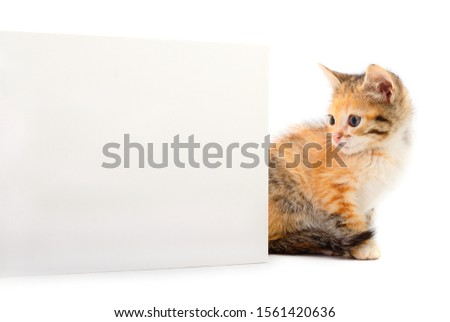 Kitten with blank. Kitten with blank on white background.  #1561420636