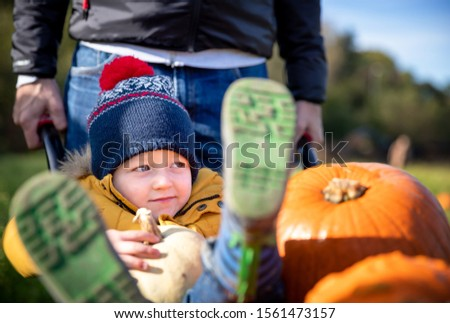 Selecting pumpkins from a pumpkin patch. Father wheels toddler in the wheelbarrow alongside the selected produce. Autumn themed image for Halloween, Thanksgiving or Harvest Festivals. #1561473157