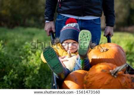 Selecting pumpkins from a pumpkin patch. Father wheels toddler in the wheelbarrow alongside the selected produce. Autumn themed image for Halloween, Thanksgiving or Harvest Festivals.  #1561473160