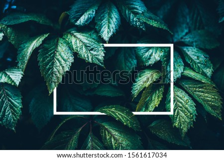 Leaf texture and white frame empty for sample text. Neon mint color 2020 trend