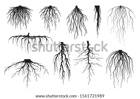 Tree roots silhouettes isolated on white, vector set of taproot and fibrous root systems of various plants, realistic black roots illustrations #1561721989