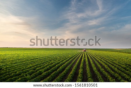 Tractor spraying soybean field in sunset. Season, plant. #1561810501