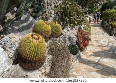 MONTE CARLO,MONACO - SEPTEMBER 12, 2017: Castus in the botanical garden of Monaco #1561827250