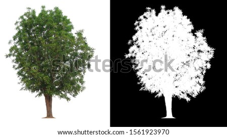 isolated tree on white background with clipping path and alpha channel  #1561923970