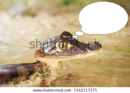 Soft focus funny picture young crocodile, alligator with bubble idea.