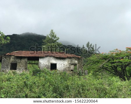Abandoned home at deep dense forest in the western guts #1562220064