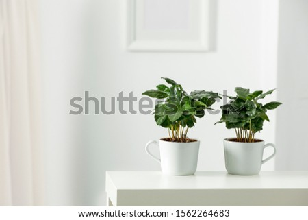 Table top with green fresh coffee plant in flowerpot. Wooden shelf with space for your decoration. White wall with frame picture background. Copy space.  #1562264683
