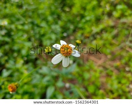 An unknown flower from the unknown Forest. #1562364301
