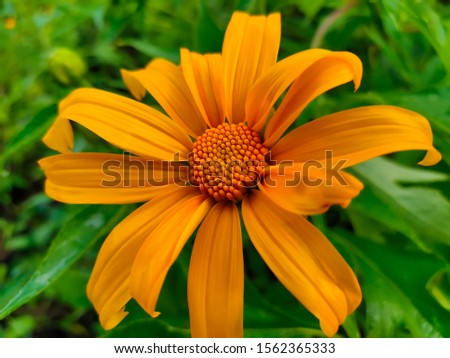 An unknown flower from the unknown Forest. #1562365333