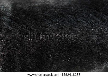 Close-up on dog hair dandruff Royalty-Free Stock Photo #1562418355
