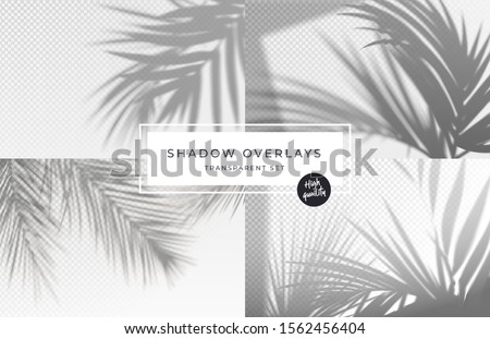 Set of shadow background overlays. Realistic Shadow mock up scenes. Transparent shadow of tropical leaves. Vector illustration