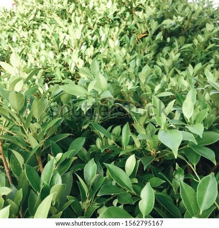 Green leaf in the summer season #1562795167