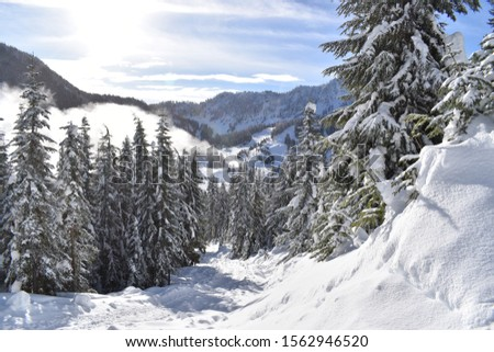 Remote evergreen trees in the winter months in the North Cascade mountains of Washington State #1562946520