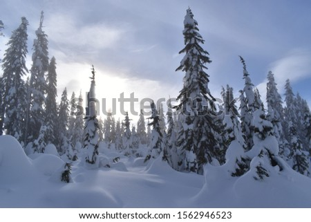 Remote evergreen trees in the winter months in the North Cascade mountains of Washington State #1562946523
