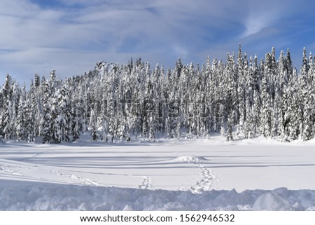 Remote evergreen trees in the winter months in the North Cascade mountains of Washington State #1562946532