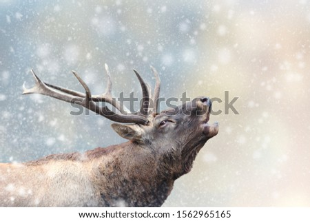 Deer in a snow on Christmas background. Winter wonderland. New Year card.  #1562965165