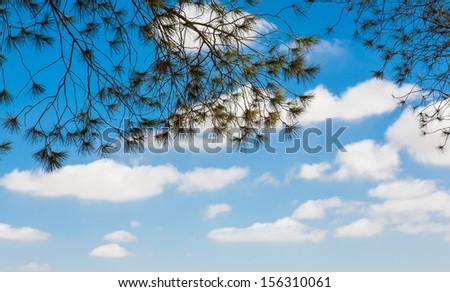tree under blue sky #156310061
