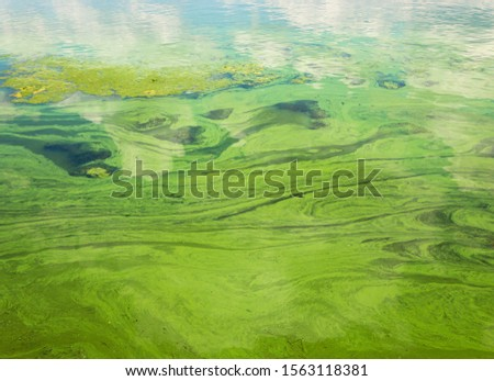 Green flowing water masses on Ukrainian river Dnipro covered by cyanobacterias as a result of phytoplankton evolution in hot seasons #1563118381