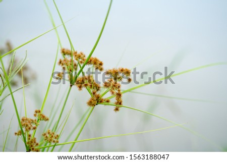 trees growing in water and foliage closeups of foliage reeds #1563188047