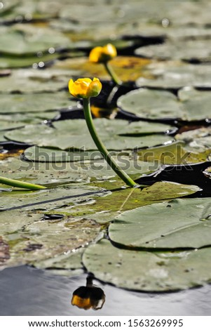 Wild flower in pond summer #1563269995