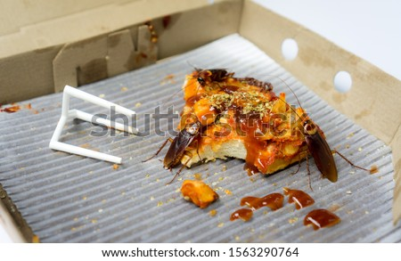 Cockroach eat pizza (expired pizza) on white background. It's makes them dirty and poor hygiene in the house. Cockroaches are carriers of the disease.
