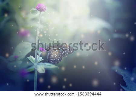 Close up butterfly on flowers and soft blurred abstract nature background. #1563394444