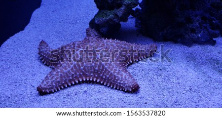 Picture of a Starfish in an Aquarium