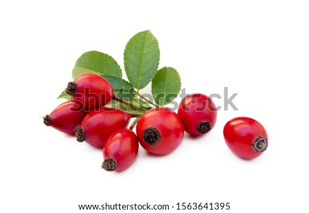 Ripe rose hip isolated on white background #1563641395