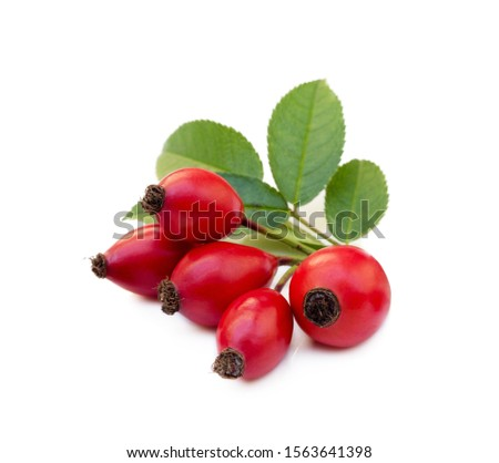 Ripe rose hip isolated on white background #1563641398