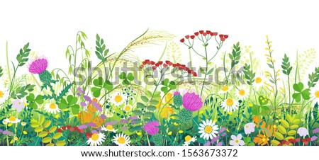 Seamless line horizontal border made with summer meadow plants. Green grass and wild flowers in row on white background.  Floral natural pattern vector flat illustration. Royalty-Free Stock Photo #1563673372